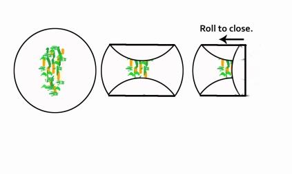 spring-rolls